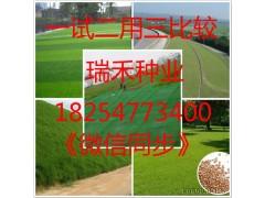 绿化草坪种子修剪机械原理