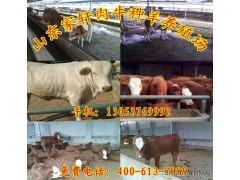养牛高效饲养技术