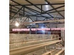 山东省巨野县瑞达养殖机械鸡 饲料粉碎机设备鸡鸭鹅专用设备
