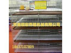 供应顺宏养殖机械-钢架鸡笼 弹簧门蛋鸡笼 镀锌板 育雏笼 阶梯育雏笼