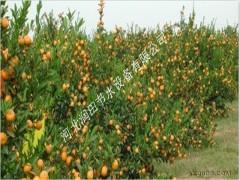 湖南绥宁县灌溉喷药设备小管出流系统质优价廉