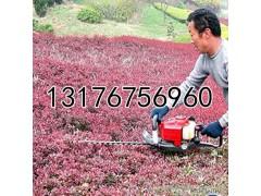 草坪茶树修剪绿篱机  冬青修剪绿篱机  质保机械绿篱机