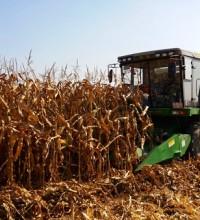 首个适宜机械化收获玉米新品种诞生